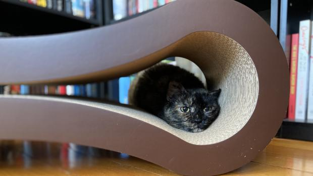 East London and West Essex Guardian Series: Shadow loves every part of the PetFusion lounger. Credit: Reviewed / Kate Tully Ellsworth