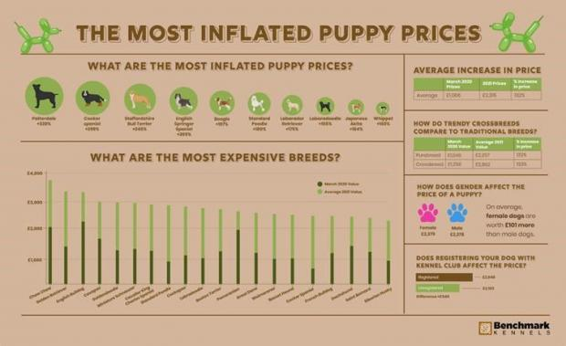 East London and West Essex Guardian Series: The most inflated puppy prices. (Benchmark Kennels)