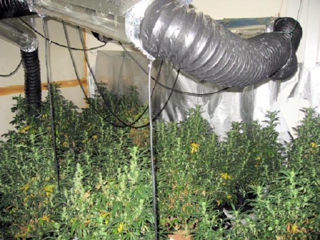 A police photograph of the cannabis factory.