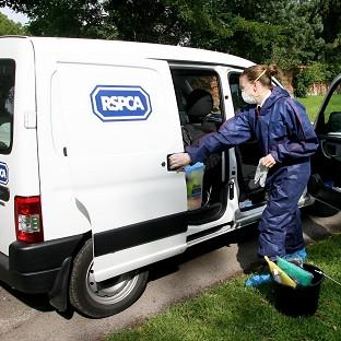 RSPCA officers joined police in an operation in Darlington following reports that dogs were being used to hunt cats and wildlife