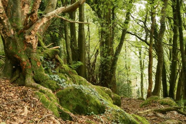 Ancient forest under 'real threat'