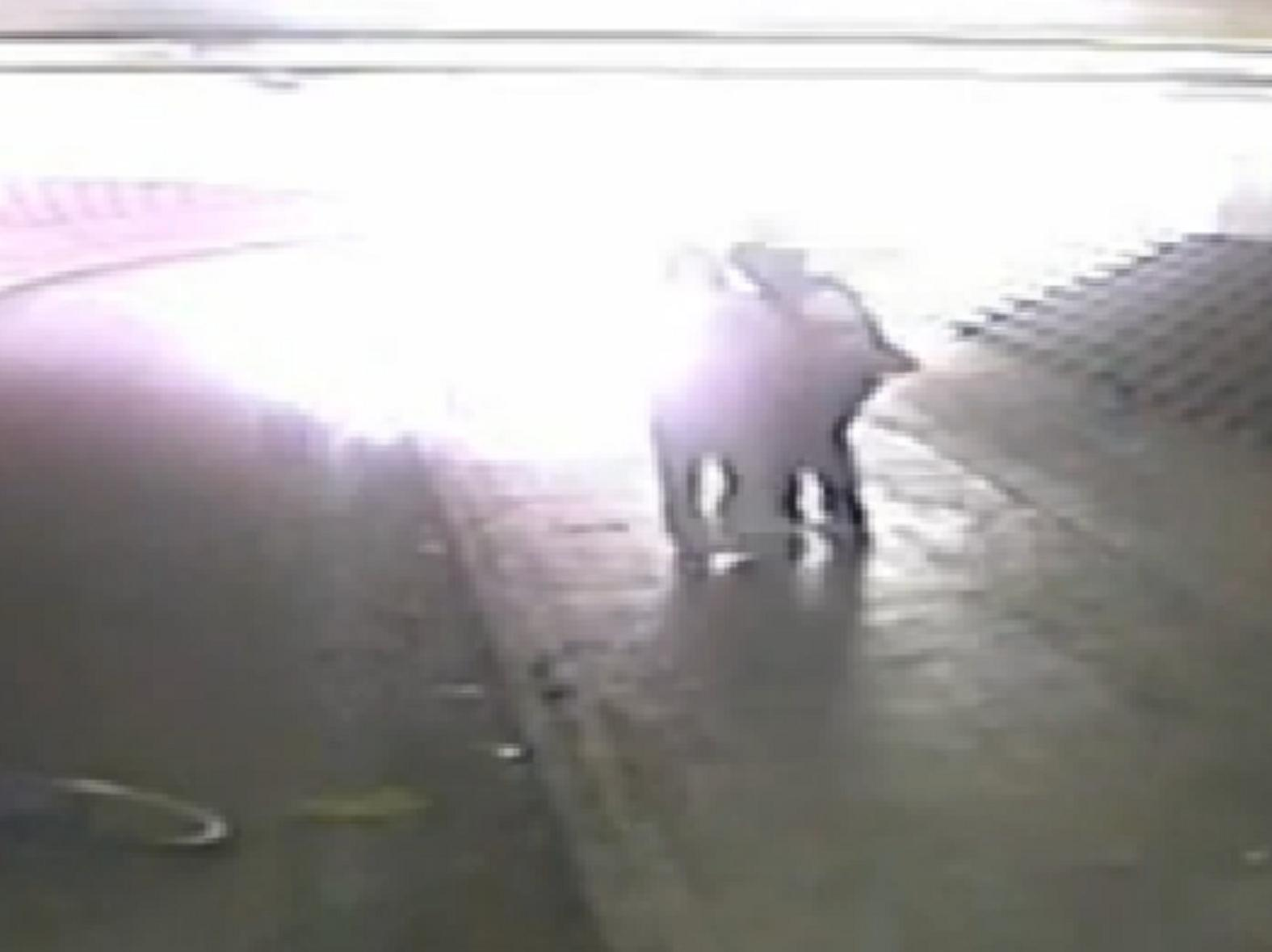 Attack on autistic teenager ignored - CCTV