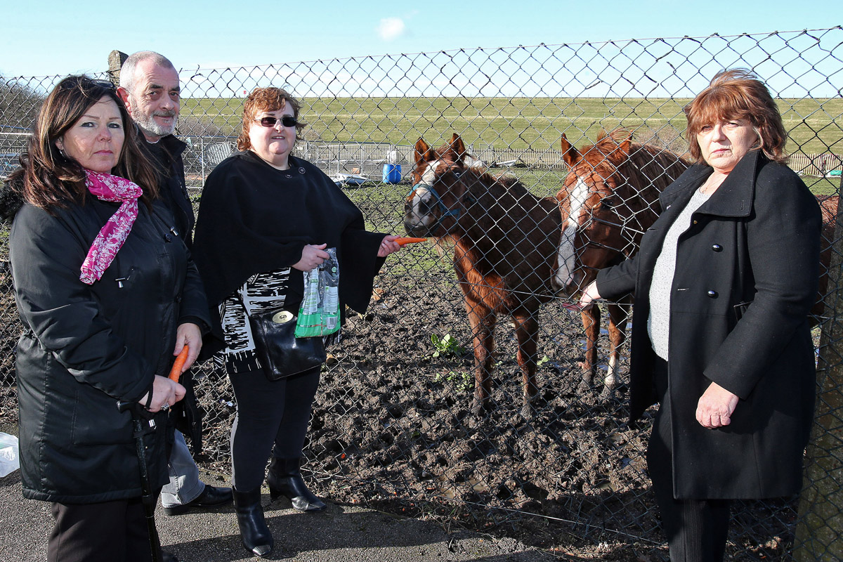 Residents raise concerns over welfare of horses