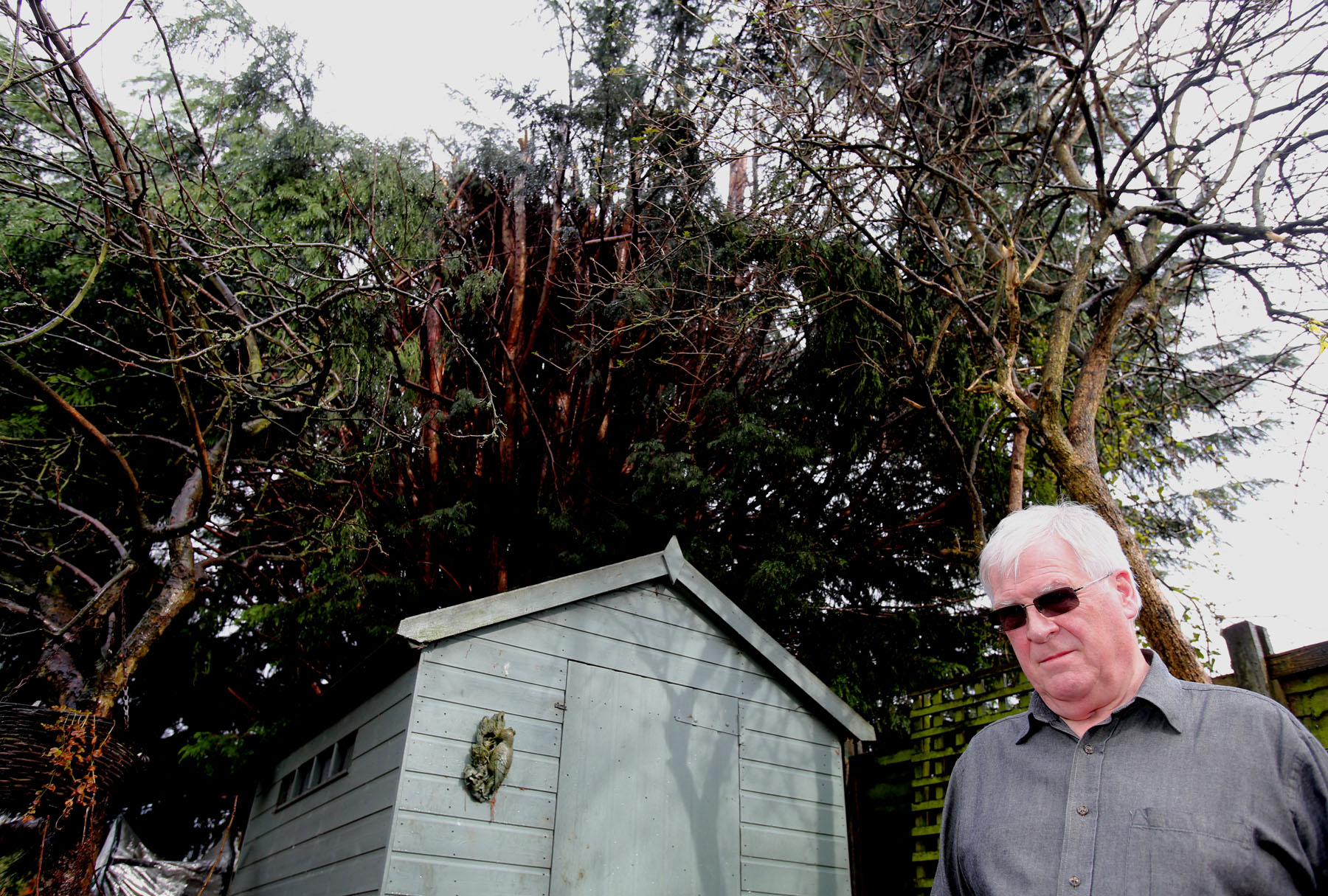 John Pearson with the conifer tree