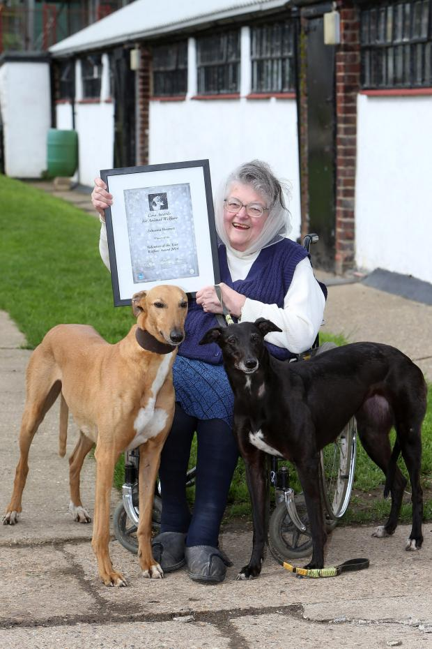 East London and West Essex Guardian Series: Johanna Beumer with dogs Red and Libby, has been rehoming greyhounds for 49 years and has won the Volunteer of the year Welfare Award in the Ceva Awards for Animal Welfare.