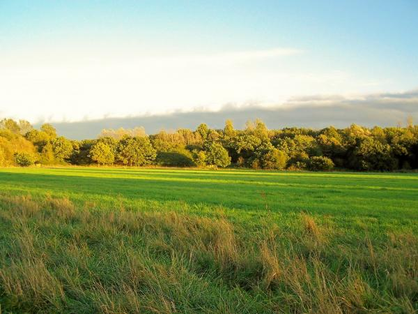 Roding Valley Meadows Nature Reserve, which lies between Chigwell and Loughton.