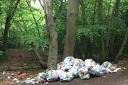 Rubbish piles up in the forest, in High Beech