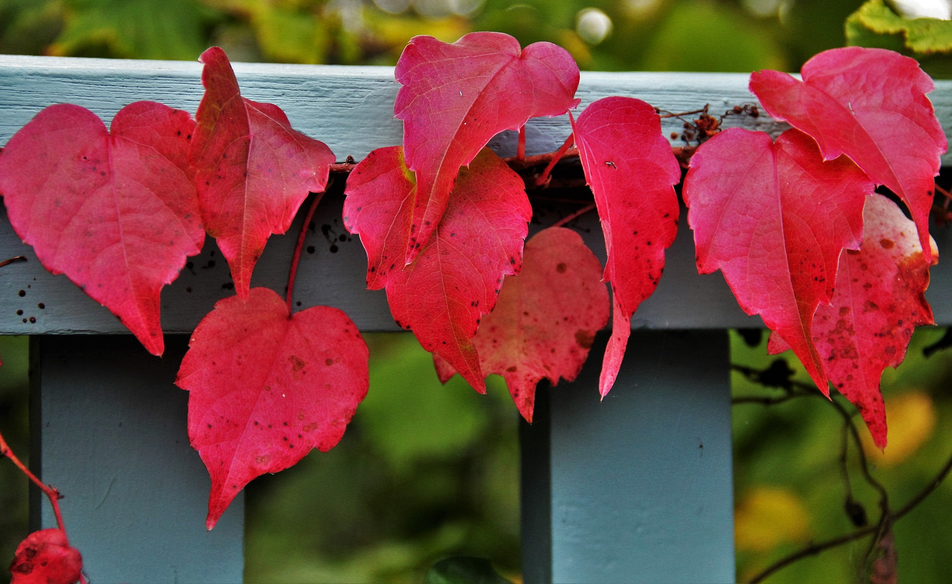 gardening 1 work for autumn preparing for winter on 14 october at