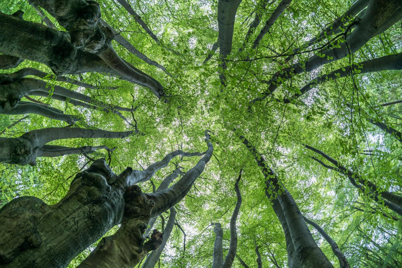 Epping Forest - Nature Reserve & Woodland - visitlondon.com