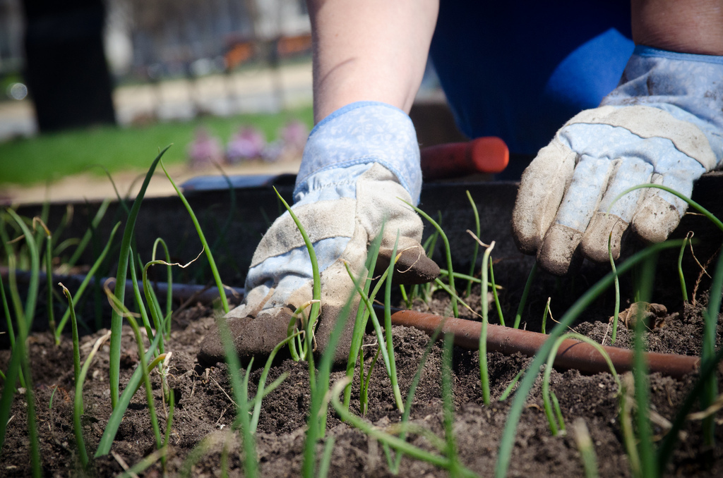 Voluntary Action Epping Forest is looking for volunteer gardeners. Credit: Lance Cheung
